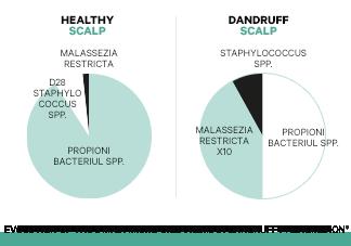 Déséquilibre du microbiome