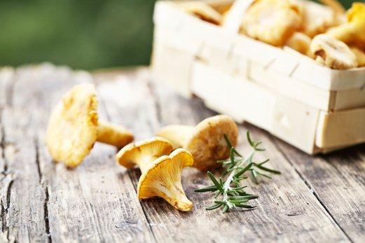 Les champignons et le vieillissement cutané : l'anti-âge 100% naturel