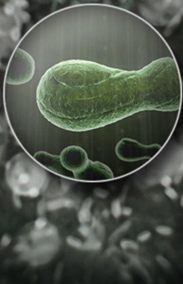 Top 6 des révélations sur le microbiome pour se débarrasser des pellicules