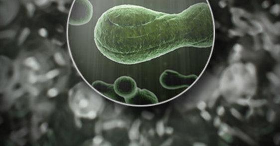 De 6 belangrijkste ontdekkingen over het microbioom om van roos af te komen